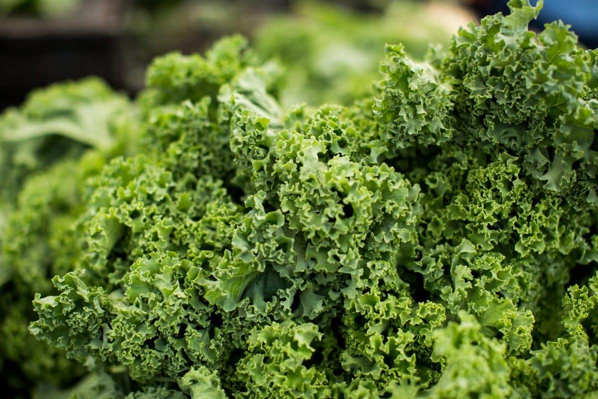 Macro Kale