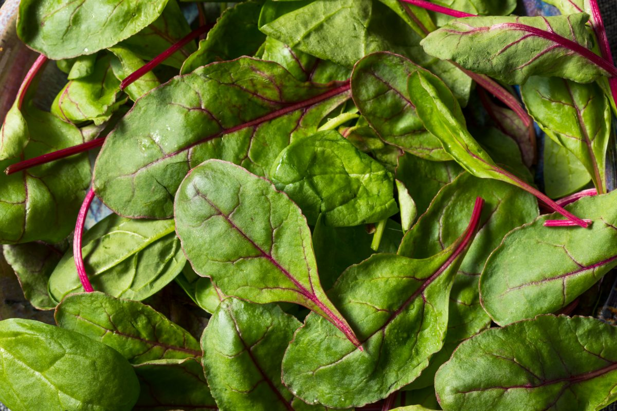 Raw Green Organic Baby Beet Greens